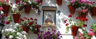 d_patios_cordoba_c001060.jpg_15509059
