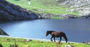 p2_lago_enol_covadonga_t3300497A.jpg_369272544