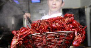 JIANGSU, enero 23, 2018 (Xinhua) -- Un chef muestra cangrejos de río en un restaunante, en el condado de Xuyi de Huai'an, provincia de Jiangsu, en el este de China, el 23 de enero de 2018. El cangrejo de río es la famosa especialidad del condado de Xuyi y la demanda de cangrejos aumenta a medida que el Festival de Primavera se acerca. (Xinhua/Zhou Haijun)