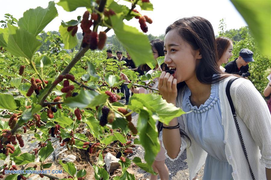HENAN, abril 30, 2018 (Xinhua) -- Imagen del 28 de abril de 2018 de visitantes recolectando moras en una base de plantación en la ciudad de Xinyang, en la provincia de Henan, en el centro de China. Las aldeas de la ciudad de Xinyang han desarrollado en los últimos años sus atractivos turísticos característicos con elementos locales. (Xinhua/Tao Ming)