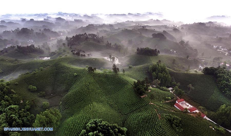 HENAN, abril 30, 2018 (Xinhua) -- Imagen del 28 de abril de 2018 de la vista de un jardín de plantación de té en la ciudad de Xinyang, en la provincia de Henan, en el centro de China. Las aldeas de la ciudad de Xinyang han desarrollado en los últimos años sus atractivos turísticos característicos con elementos locales. (Xinhua/Tao Ming)