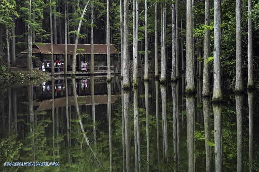 HENAN, abril 30, 2018 (Xinhua) -- Imagen del 28 de abril de 2018 de personas visitando un parque forestal en la reserva natural nacional de Jigongshan, en la ciudad de Xinyang, en la provincia de Henan, en el centro de China. Las aldeas de la ciudad de Xinyang han desarrollado en los últimos años sus atractivos turísticos característicos con elementos locales. (Xinhua/Tao Ming)